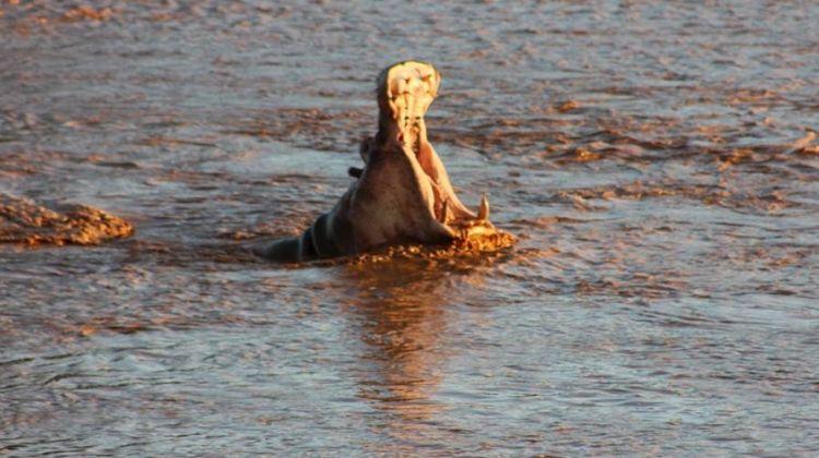 3 Days Safari to Samburu National Reserve