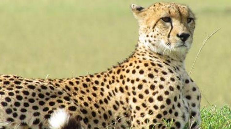 3 Days Wildesbeest Migration Safari on Budget