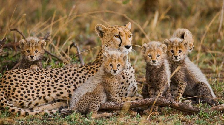 3 Night 4 Day Best of Tanzania Budget Camping Safari