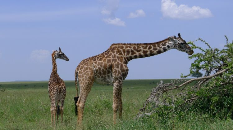 3Days / 2Nights: Wildlife Safari & Cultural Tour