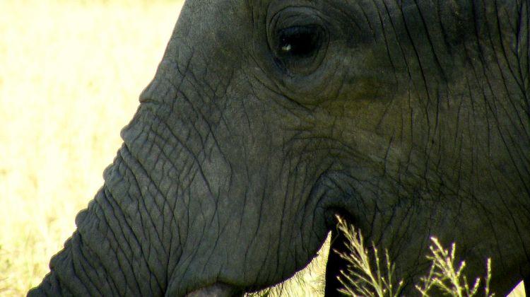 4 day Amboseli & Tsavo National Parks Safaris