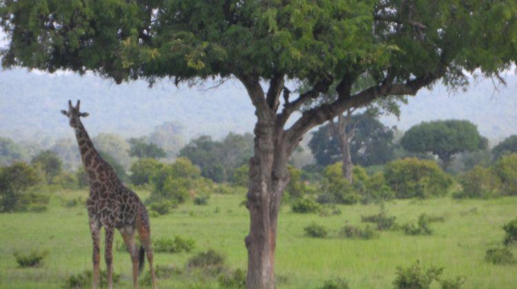 4 Day Big Five  Camping Safari