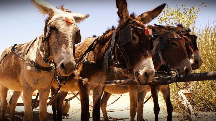 4 Day Etosha & Swakopmund Adventure