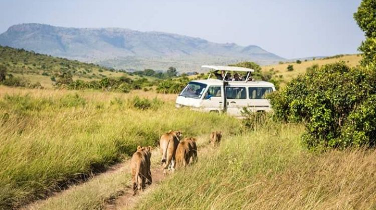 4-Day Hemingway Safari