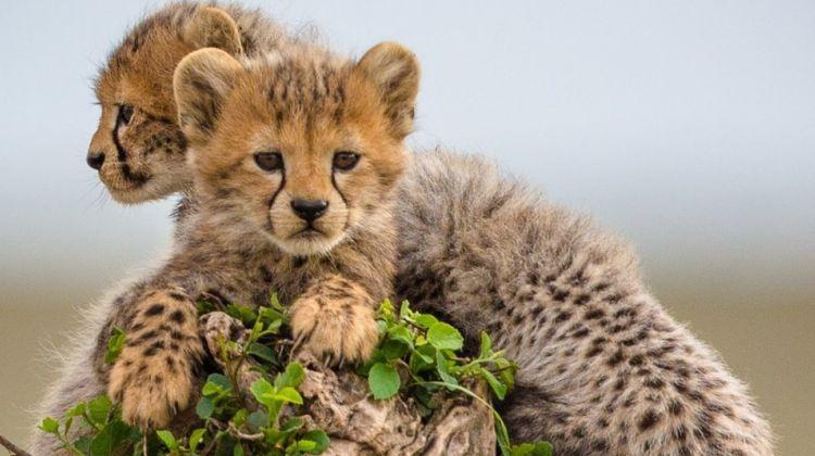 4 Day Incredible Tanzania Safari
