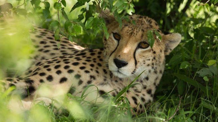 4-Day Kenya Camping in Maasai Mara and Lake Nakuru