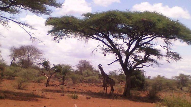 4-day Kenya Great Wildebeest Migration Safari Tour