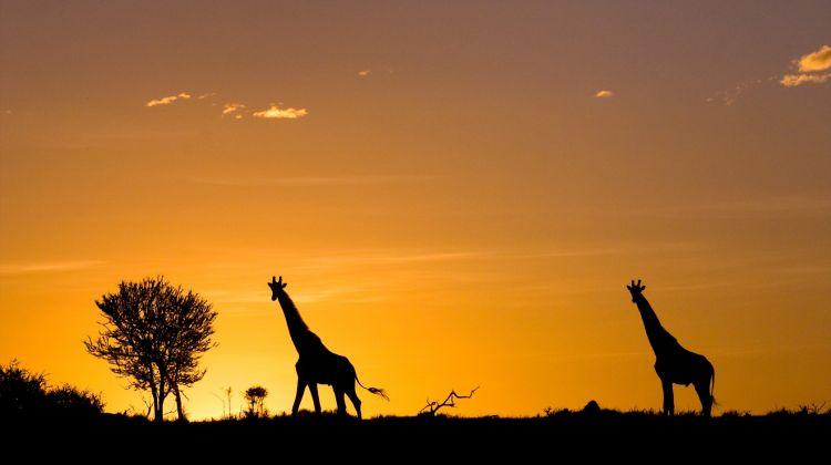 4 day Lake Naivasha and Masai Mara Safari