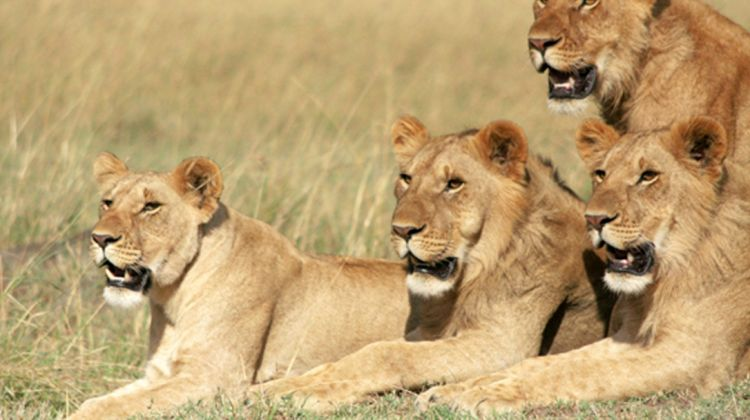 4-day Lake Nakuru & Maasai Mara Budget Safari