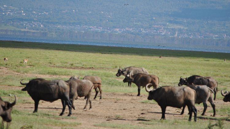 4-Day Maasai Mara & Lake Nakuru Safari Tour