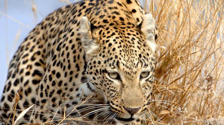 4 Day Safari in Tarangire and Ngorongoro Crater