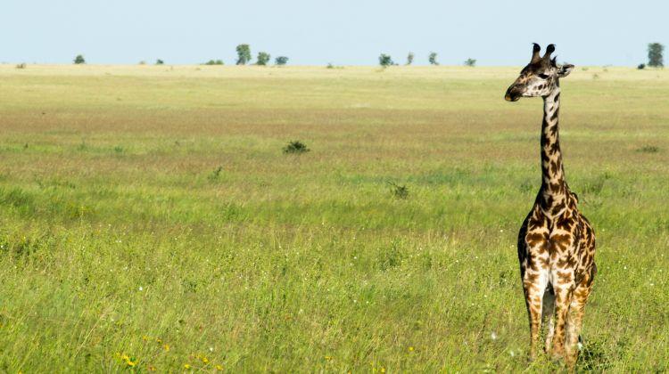 4 Day Safari:  Lake Manyara / Serengeti / Ngorongoro