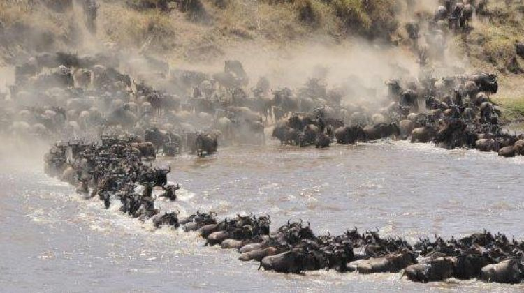 4-Day Serengeti Wildebeest Migration