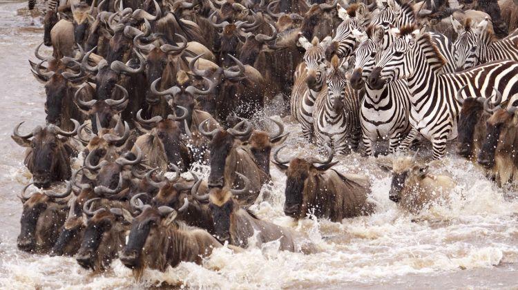4-Day Serengeti Wildebeest Migration