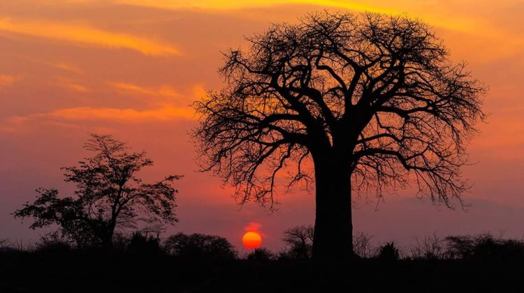 4-Days 3 Nights Tanzania Wildlife Camping   Safari