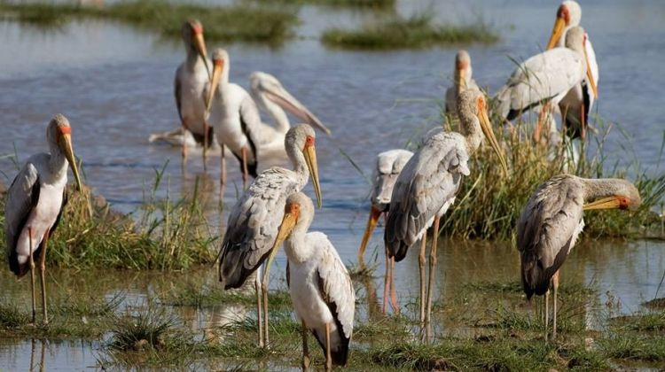 4 Days Bird Watching Tour in Tanzania