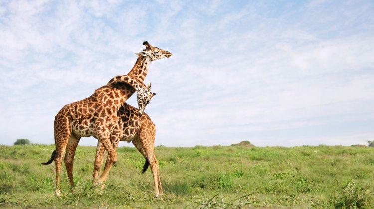 4 Days Camping Safari In Northern Tanzania