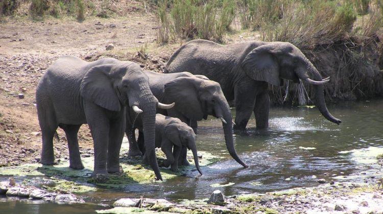 4 Days in Kruger