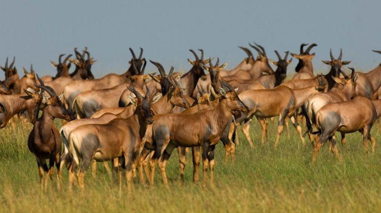 4 Days Safari in Lake Manyara, Serengeti, & Ngoro Crater