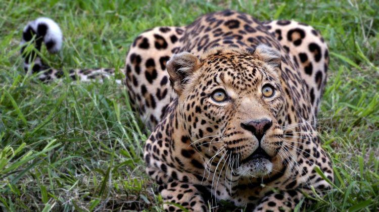 4 Days Safari - Manyara, Ngorongoro and Serengeti