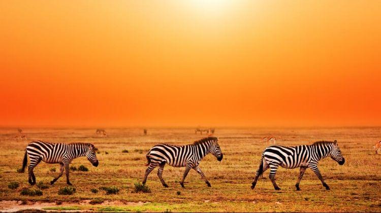 4 Days Tarangire, Serengeti & Ngorongoro Crater