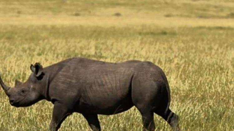 5 Camping Lake Manyara Serengeti Ngorongoro Group Joining