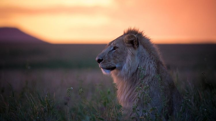 5-Day Affordable Safari Adventure in Tanzania
