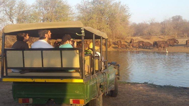 5 Day Classic Kruger Park Safari