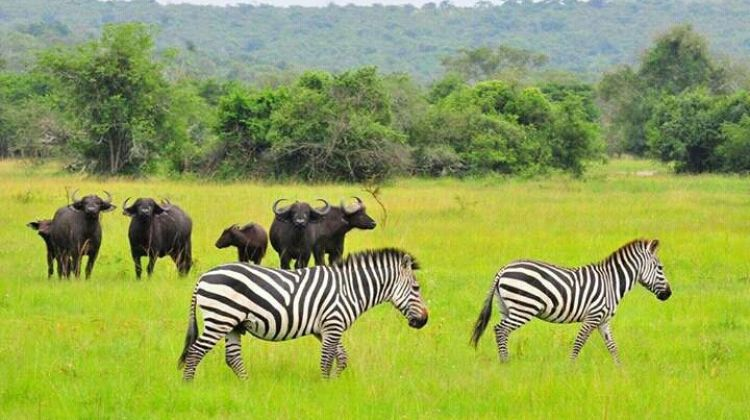 5-Day Gorilla & Lion Safari in Uganda