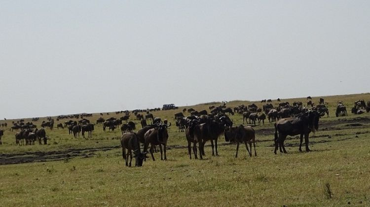5-Day Maasai Mara Reserve and Nakuru National Park Safari