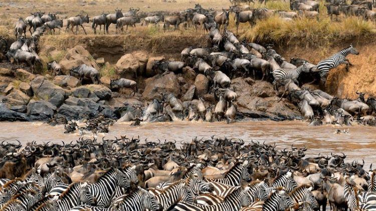 5-Day Safari to Serengeti National Park - Fly-in Express