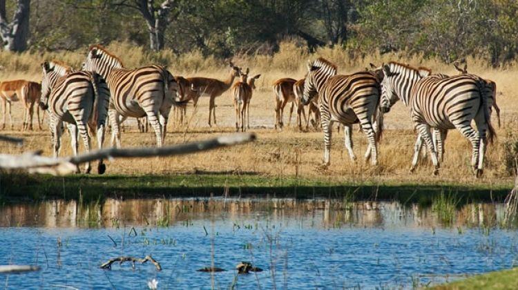 5 Days 4 Nights Okavango Delta Tour