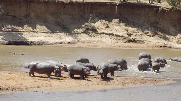 5 Days adventure maasai mara, lake Nakuru & Lake Naivasha