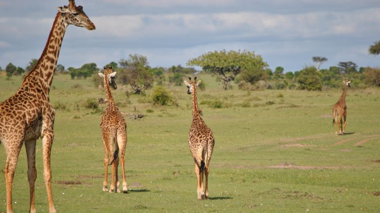 5 Days Maasai Mara and the Lakes Safari