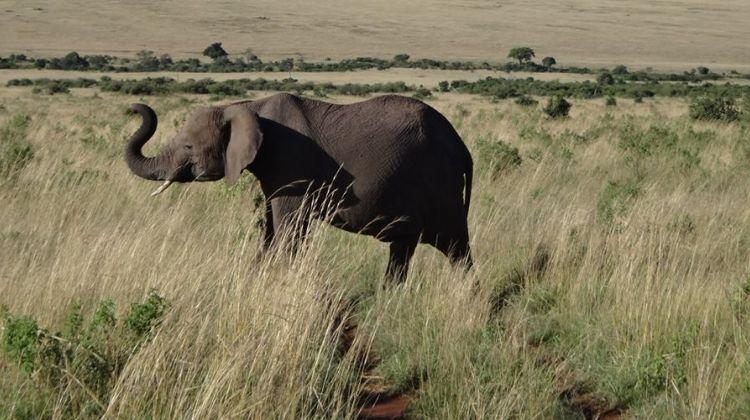 5 Days Maasai Mara - Lake Nakuru Safari
