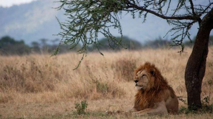 5 Days Pumba Safari in Serengeti & Ngorongoro