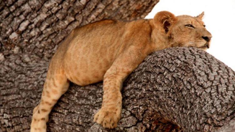 5 Days Safari in Serengeti, Tarangire, and Ngorongoro