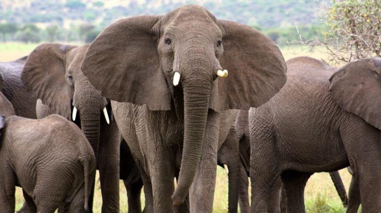 5 Days Safari - Tarangire, Serengeti and Ngorongoro