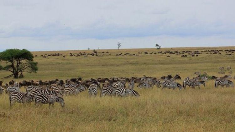 5 Days Tarangire, Serengeti, Ngorongoro, Lake Manyara