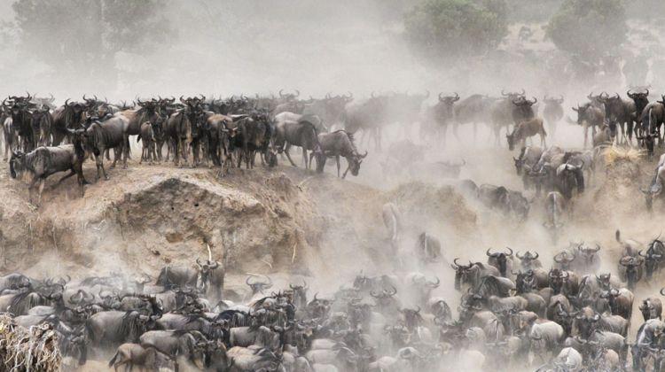 5 Days Wildebeest Migration Safari in Tanzani