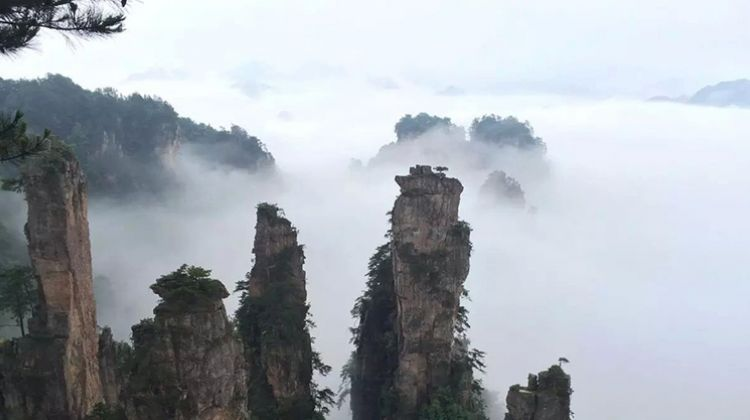 5 Days Zhangjiajie Avatar Mountain Exploring Tour