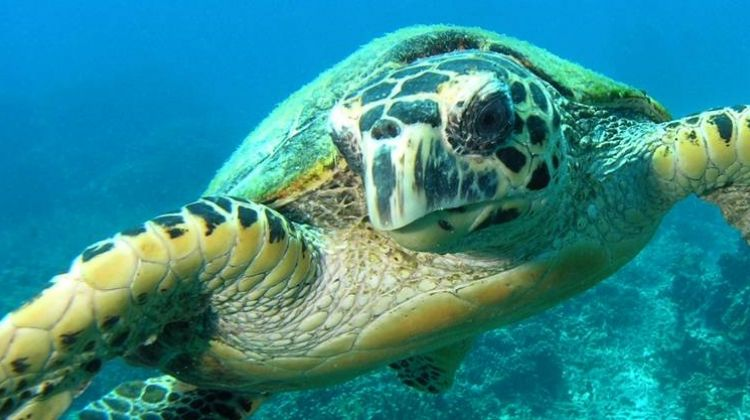 5D/4N Leisure Diving on Tioman Island