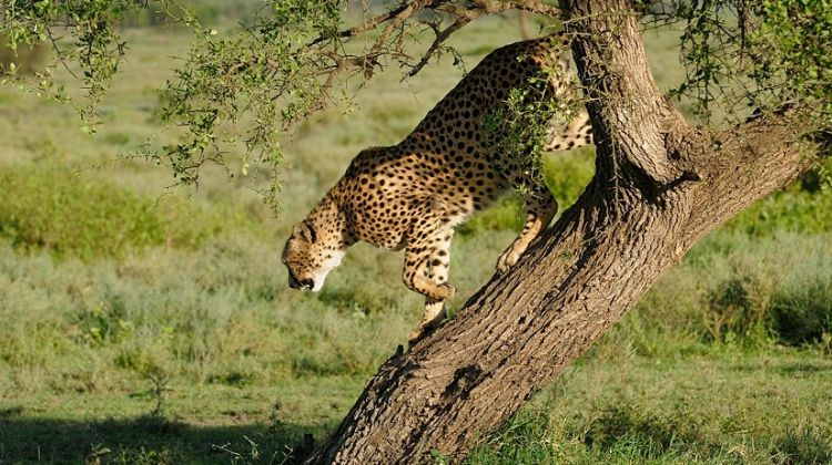 6 Day Adventure Tented Camps Safari in Serengeti