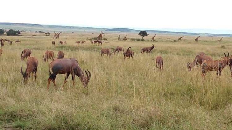 6-Day Fascinating Safari
