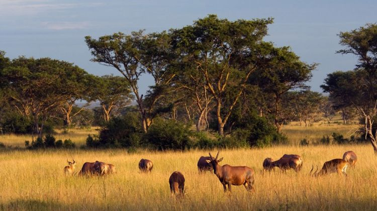6 Day Lake and Wildlife Safari Tour in Uganda