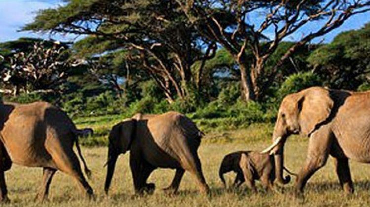 6-day Lake Nakuru, Maasai Mara, Amboseli Budget Camping