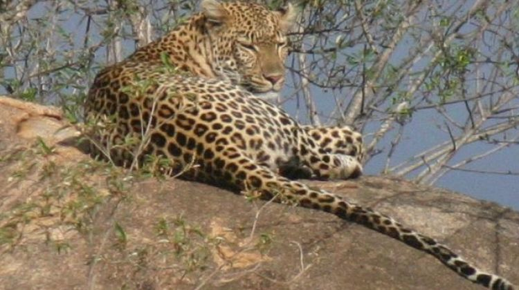6 Day Safari in Mikumi and Udzungwa Mountains