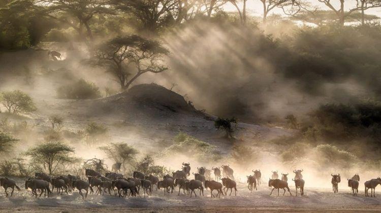 6 Day Taste of 'Real' Tanzania Safari Adventure