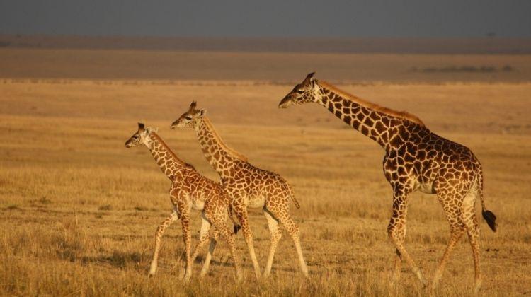 6 Days Affordable Safari
