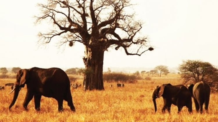 6 Days Affordable Safari